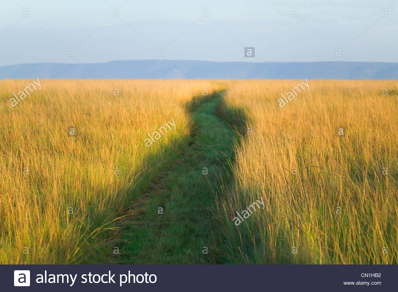 Path among tall grass on the savanah, Masai Mara National Reserve, Kenya Stock Photo