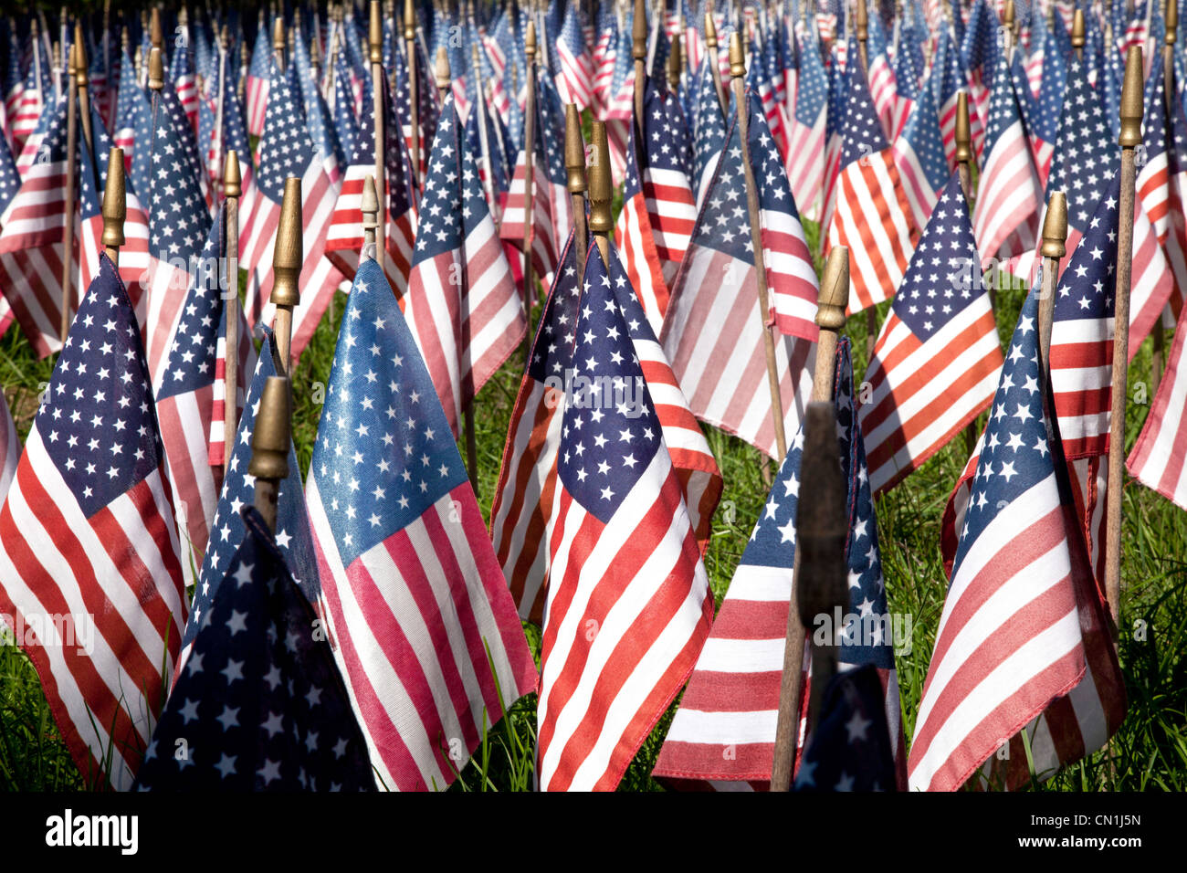 Field of American Flags, Kent, Connecticut, USA - Stock Image