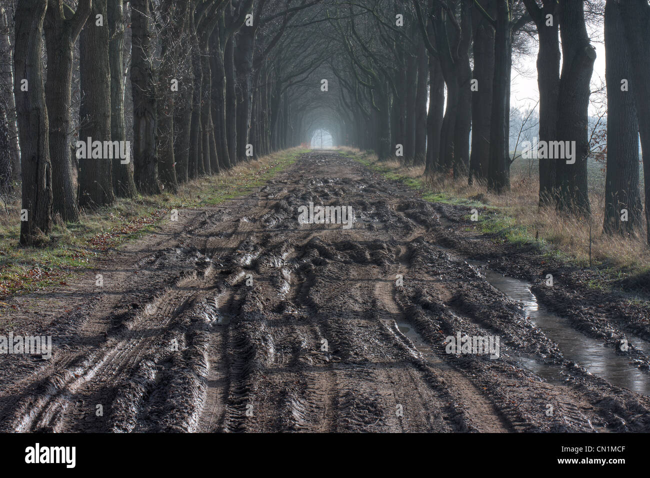 Bad road conditions: a muddy countryroad with car tracks in autumn. - Stock Image