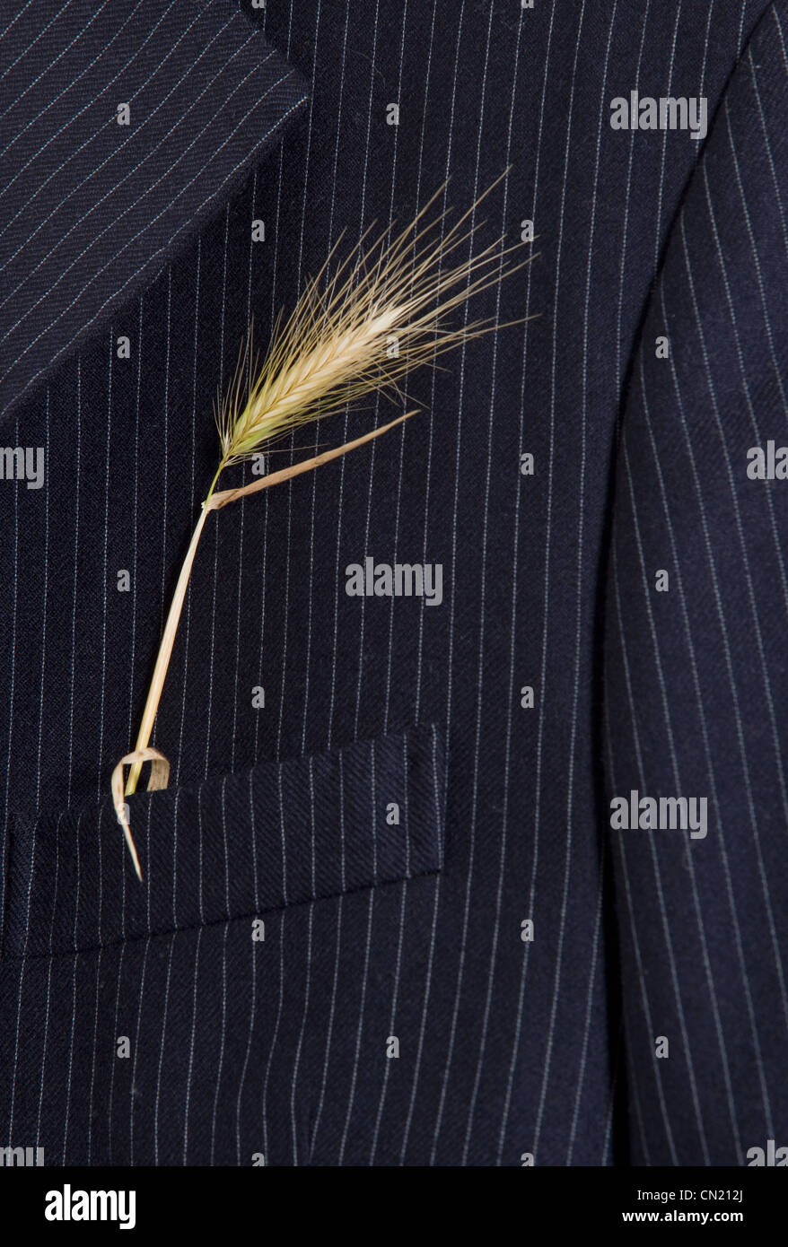 Pinstripe suit jacket with ear of corn - Stock Image
