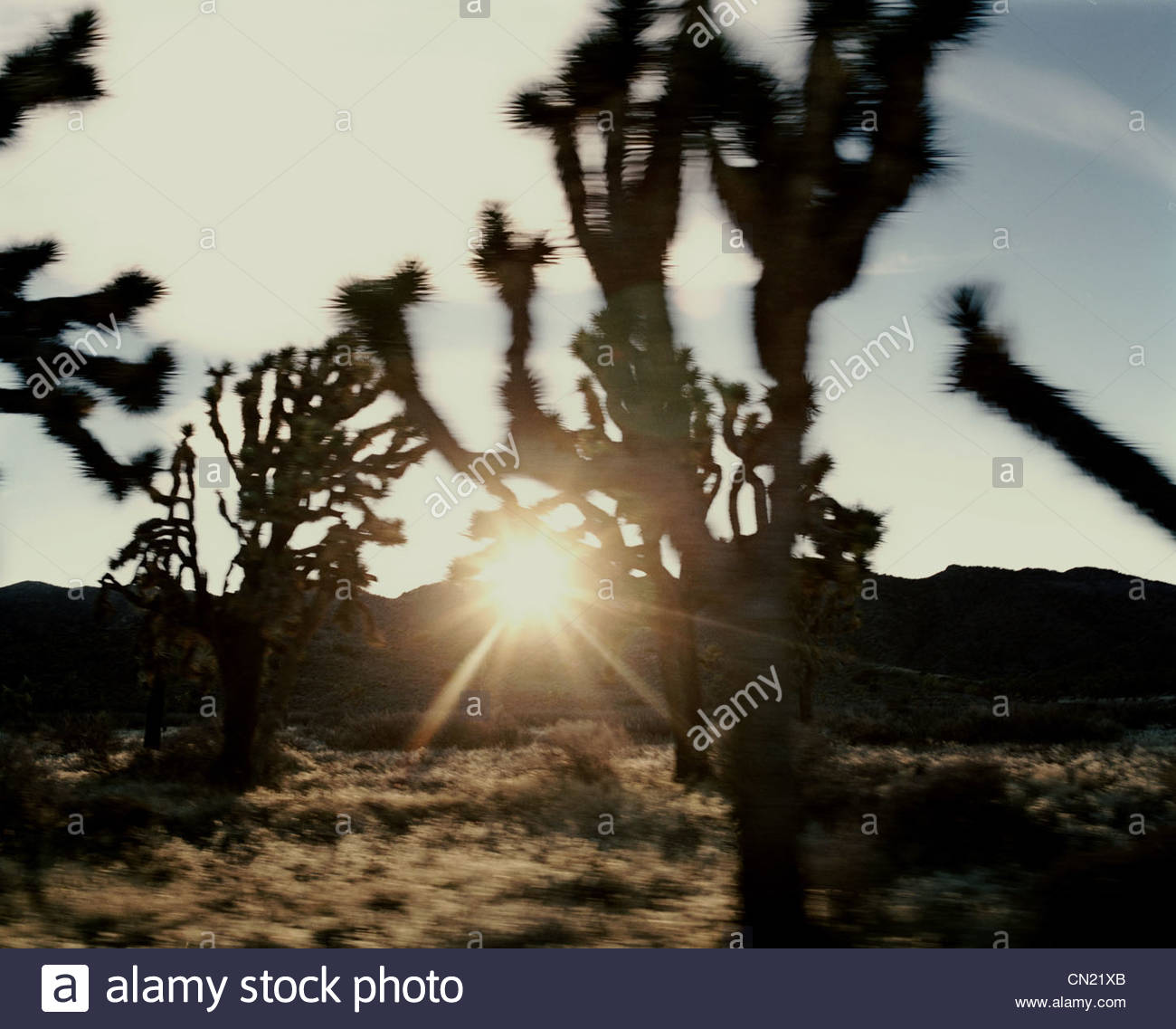 Blurry scenic, Joshua Tree, California, USA - Stock Image