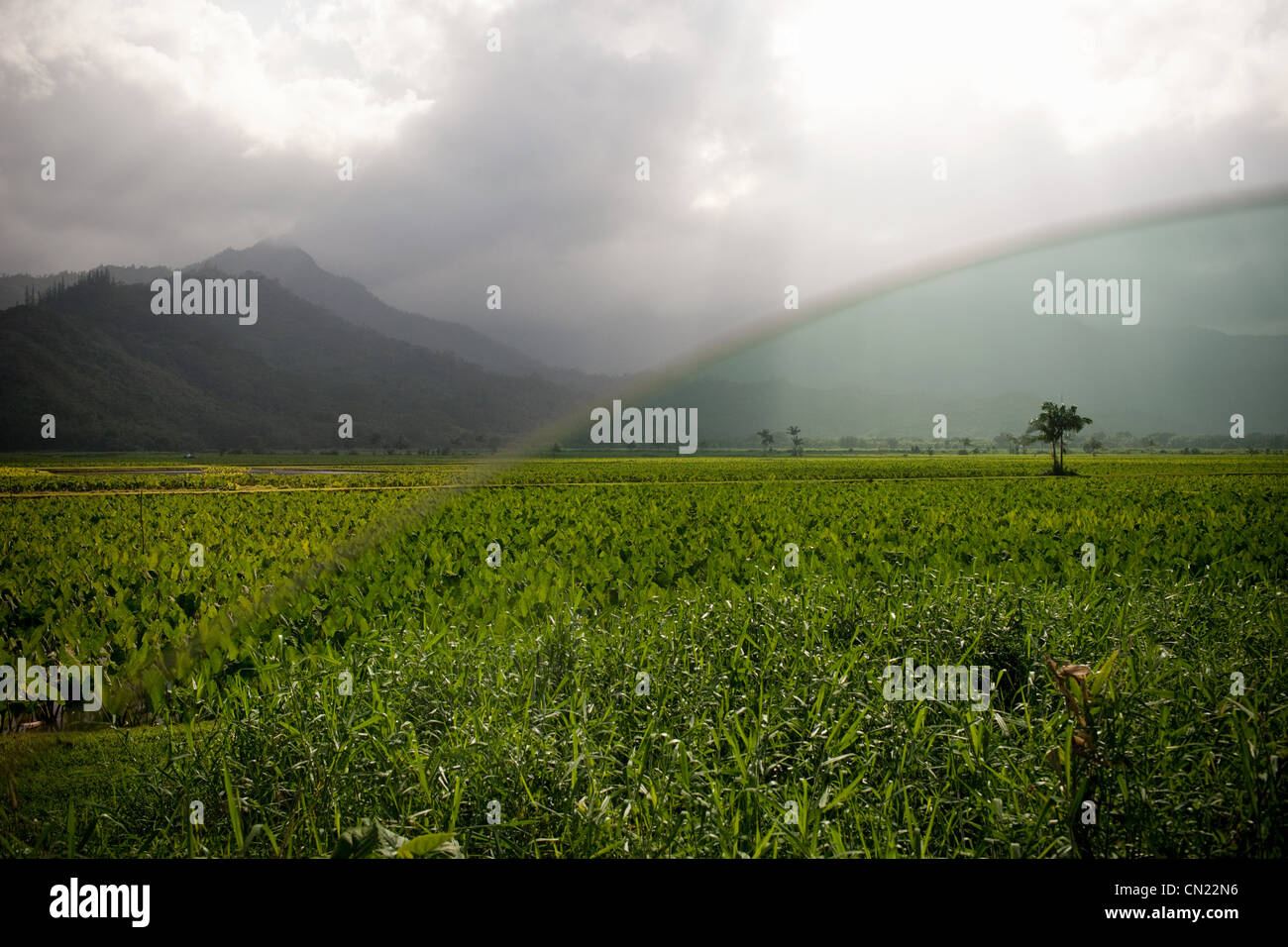 Hawaiian landscape seen through car window - Stock Image