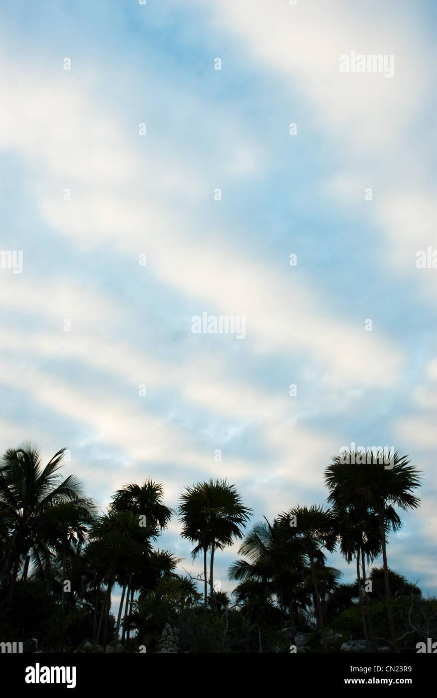 Palm trees, Tulum, Mexico - Stock Image