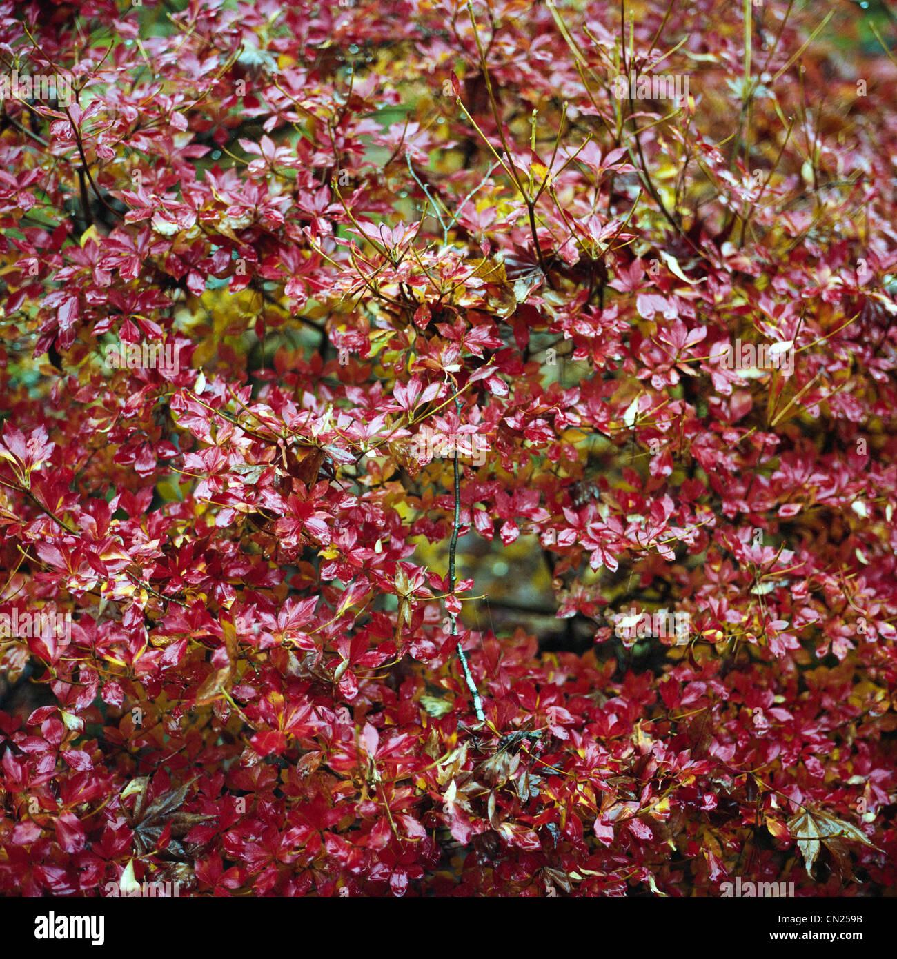 Autumn leaves - Stock Image