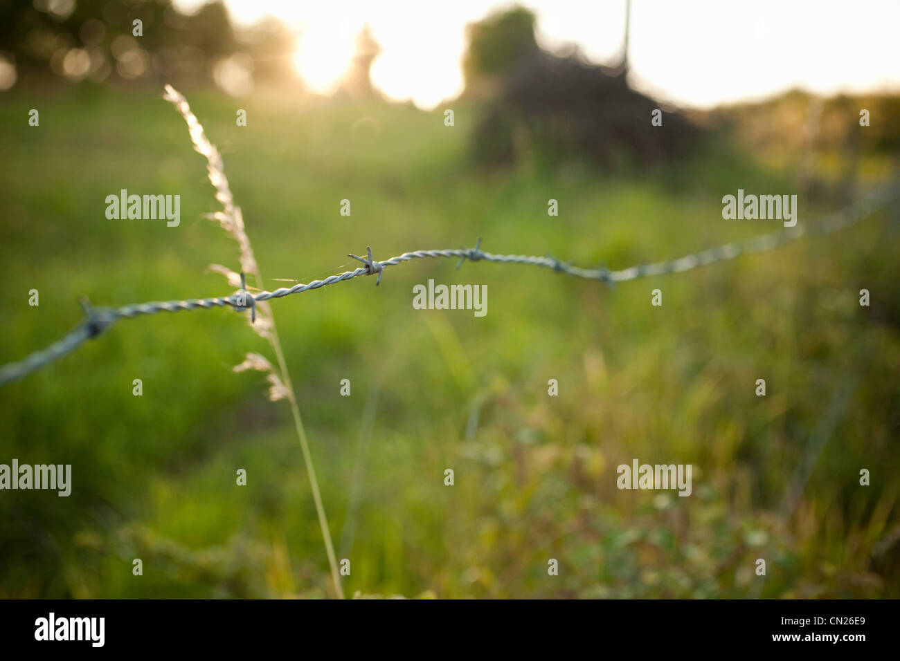 Barbed wire fence in field - Stock Image