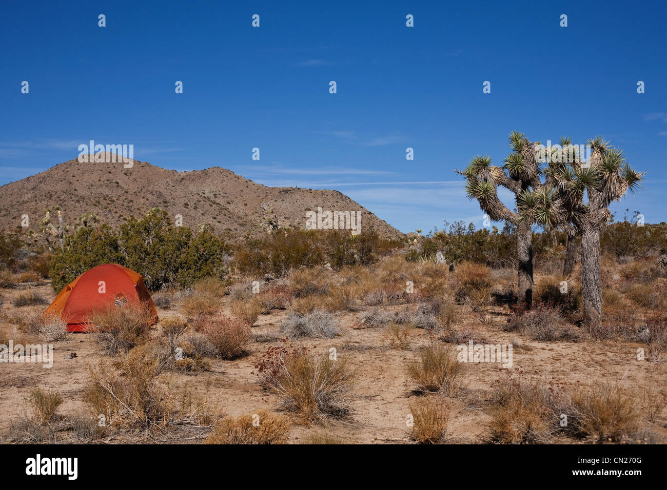 Tent in Joshua Tree national park, California, USA Stock Photo