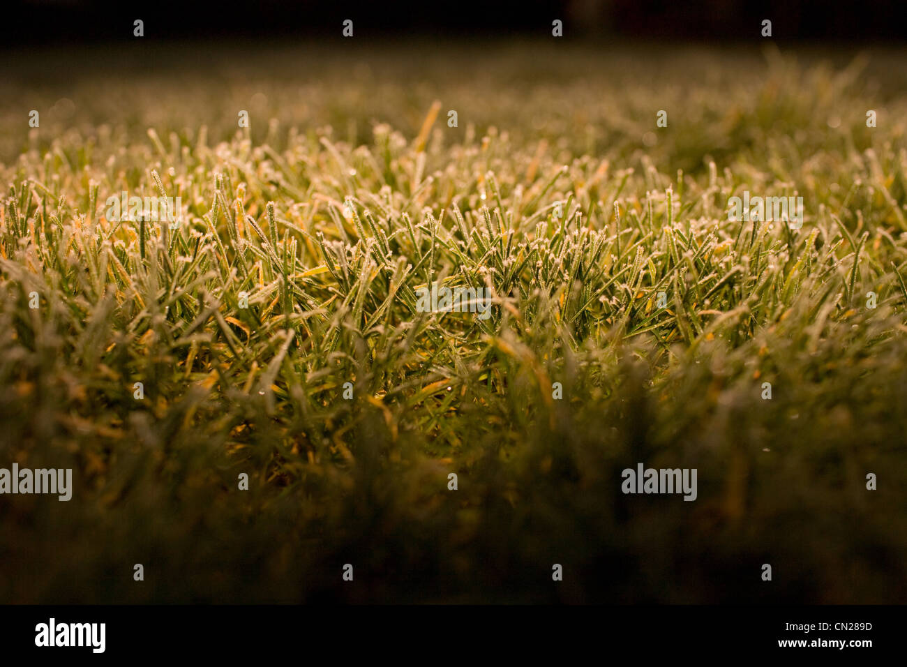 Frost on grass, close up Stock Photo