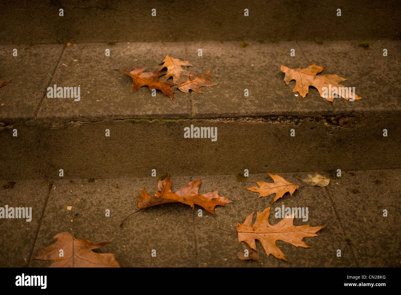 Autumn leaves on steps - Stock Image