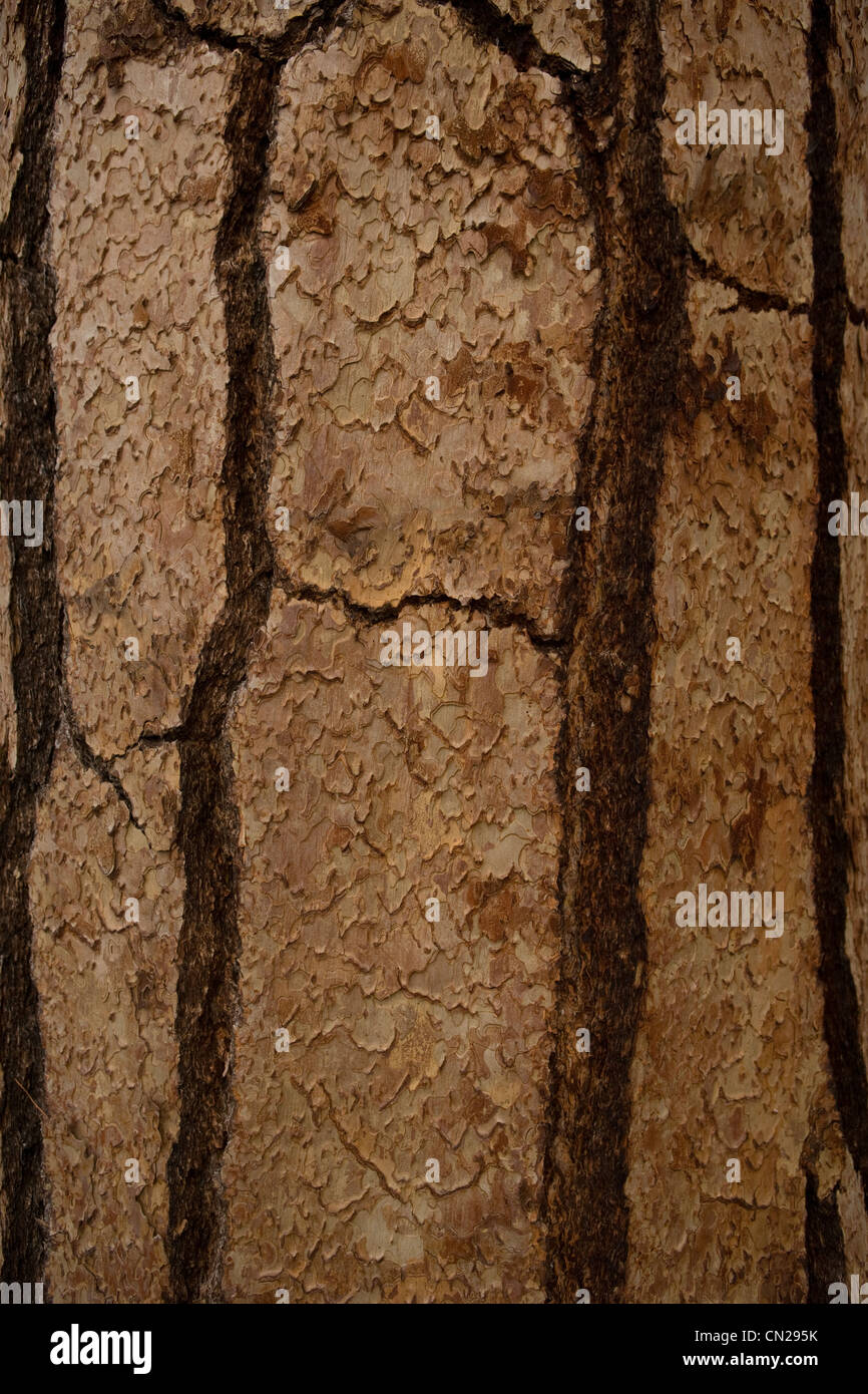 Tree bark, full frame - Stock Image