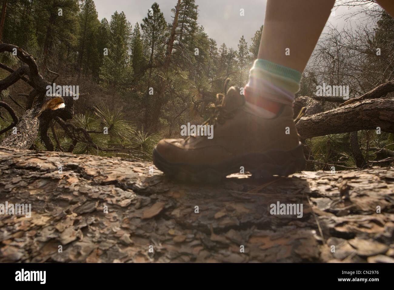 Woman hiking along tree trunk - Stock Image