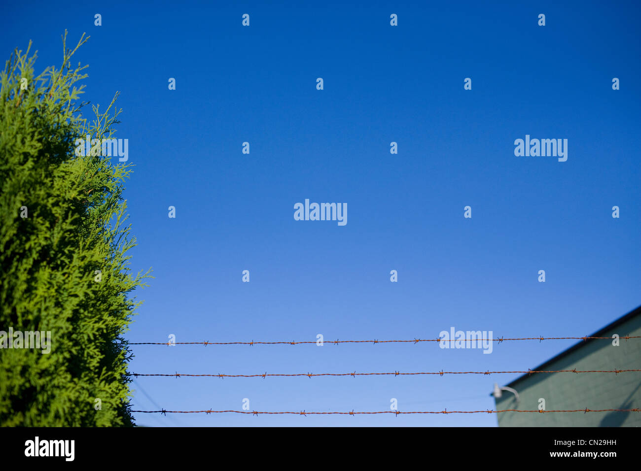 Barbed wire fence against clear blue sky Stock Photo