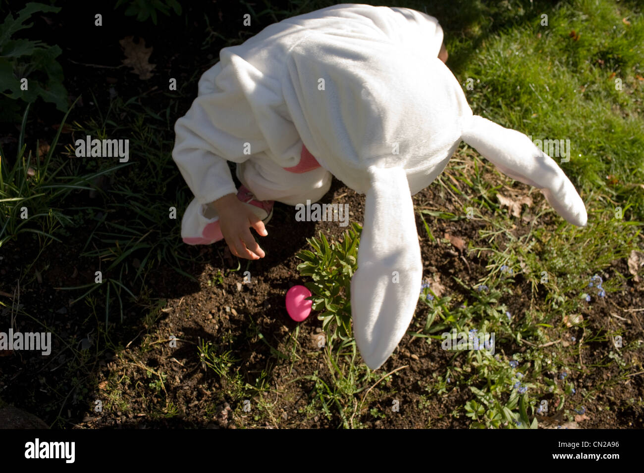 Young boy dressed as Easter bunny, high angle view - Stock Image