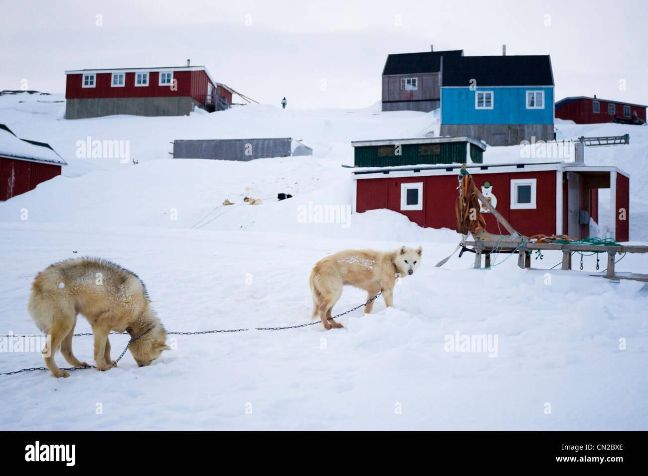 Kulusuk village scene with dogs, East Coast, Greenland - Stock Image