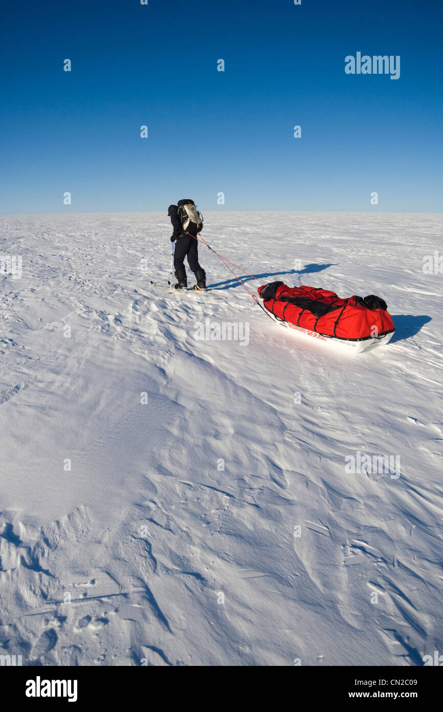 Explorer hauling sledge in the polar region, Greenland - Stock Image