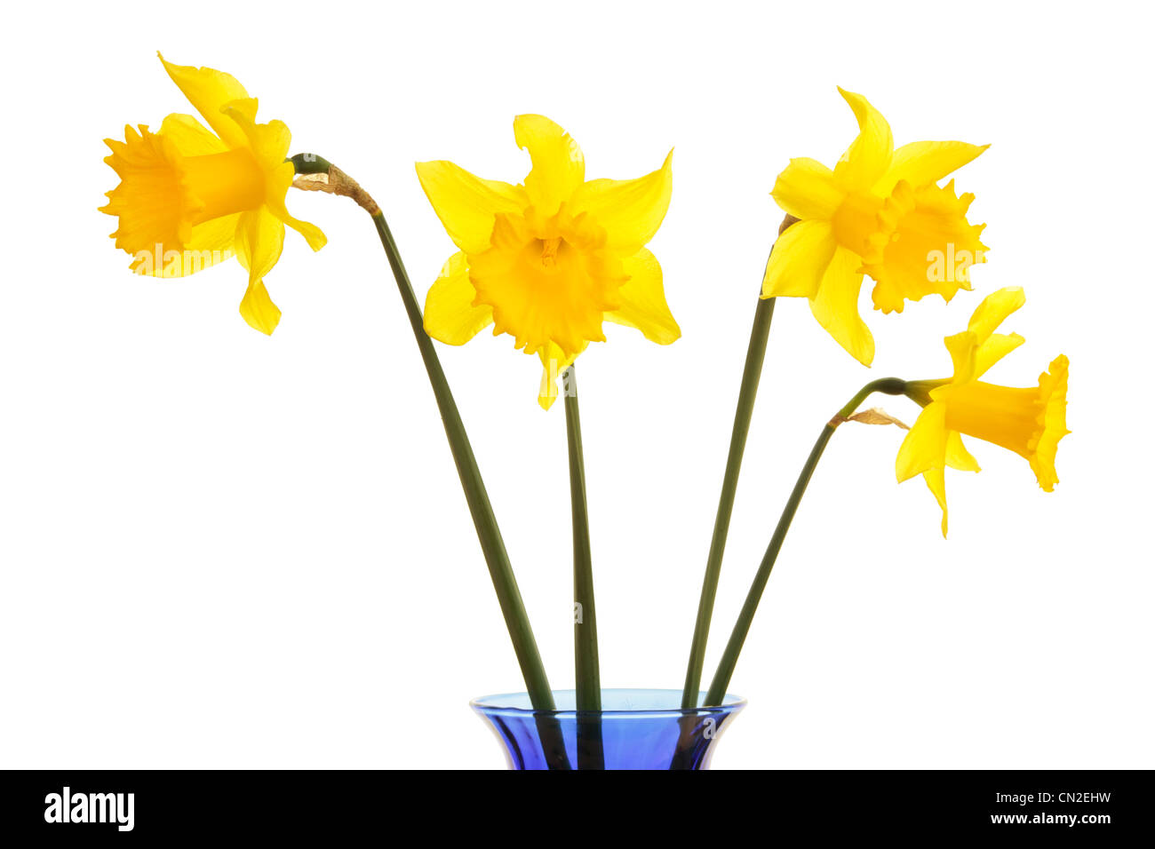 Spring flowers daffodils vase stock photos spring flowers spring daffodils in a blue vase against white background stock image mightylinksfo