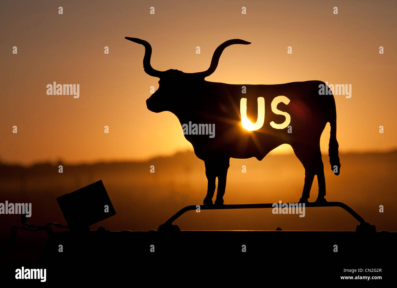 Longhorn Cow on Mailbox at Sunset - Stock Image
