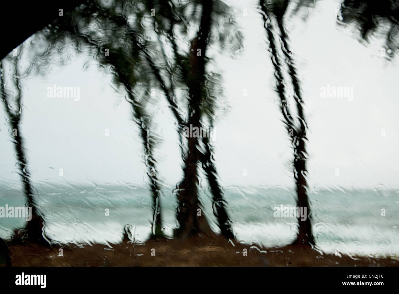 Raindrops on window and view of palm trees Stock Photo