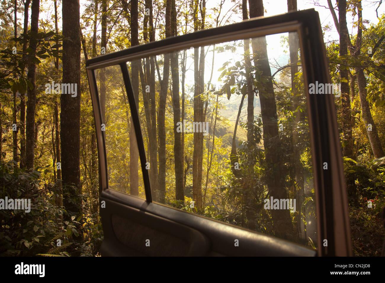 Forest seen from open car door - Stock Image