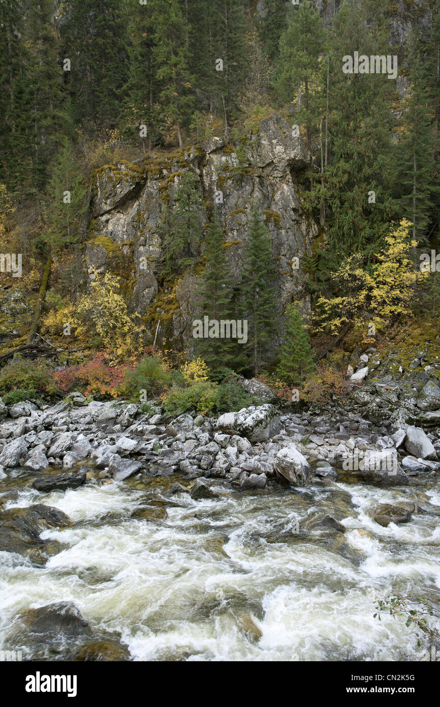 River Along Rocky Terrain in Forest, Montana, USA - Stock Image