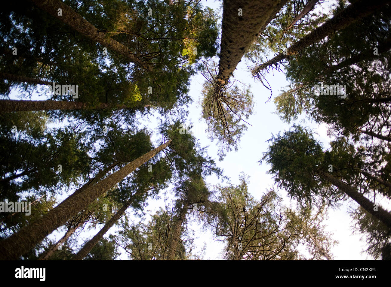 Trees, low angle view - Stock Image