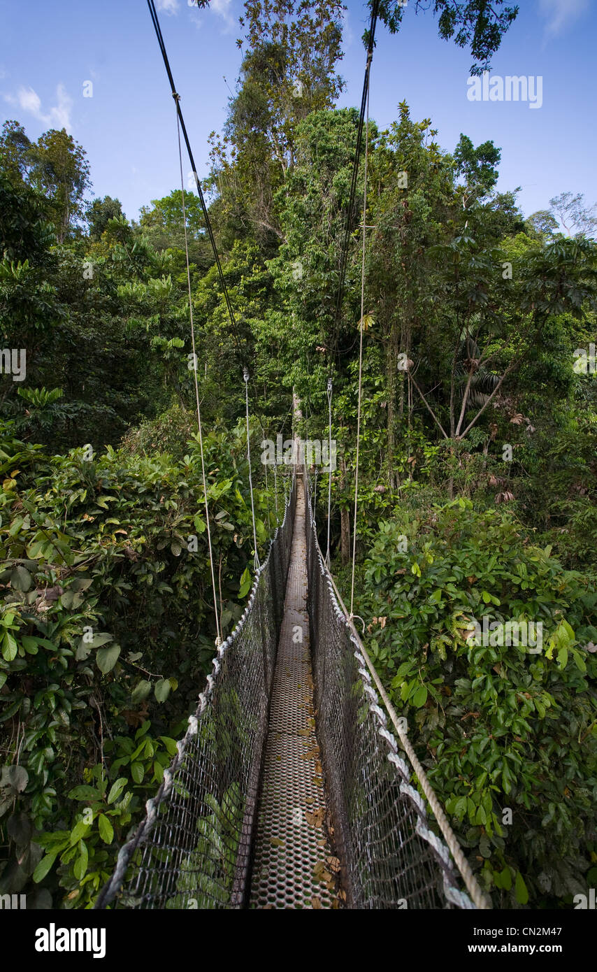 CANOPY WALKWAY over primary rainforest, Iwokrama forest reserve, Guyana, South America. Stock Photo