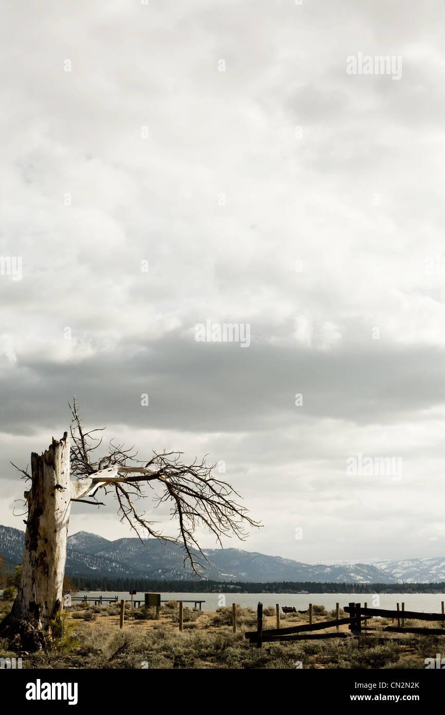 Dead tree, Lake Tahoe, California, USA Stock Photo