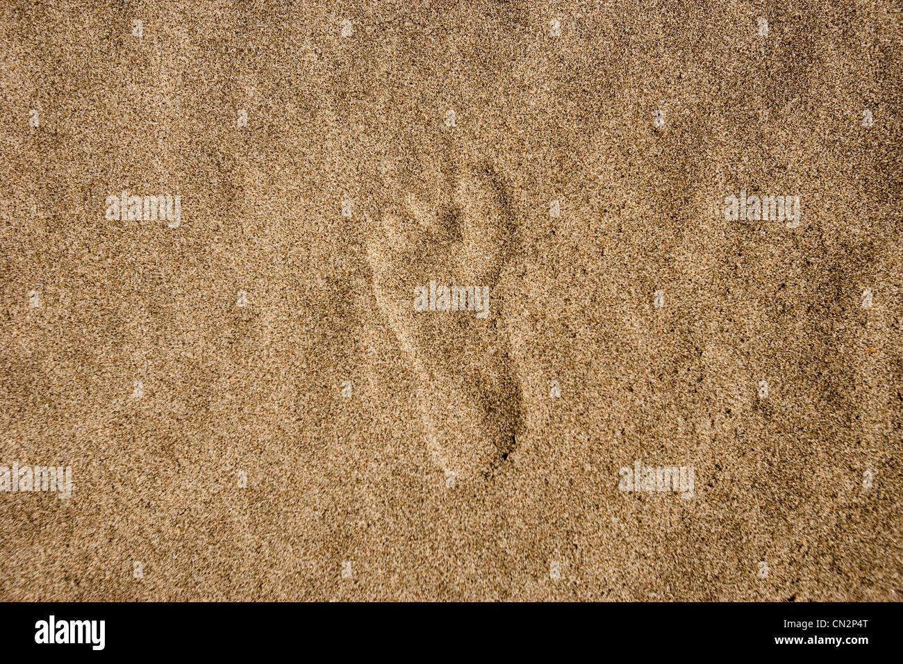 Single footprint in sand - Stock Image