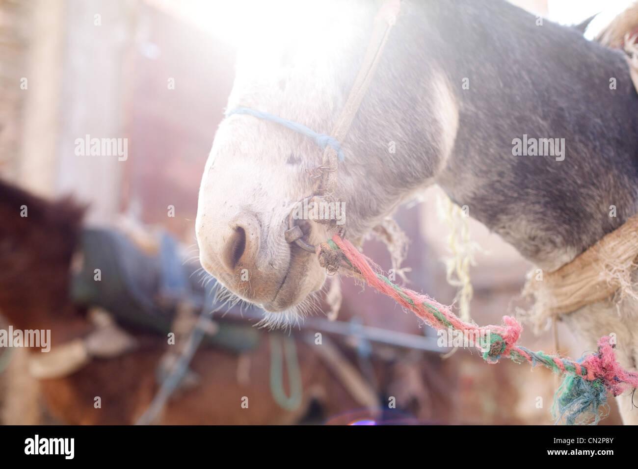 Donkey's head, crop Stock Photo