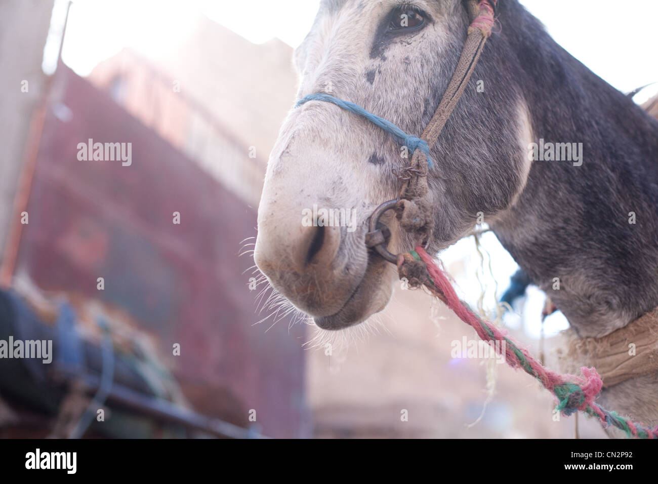 Donkey's head, low angle view Stock Photo