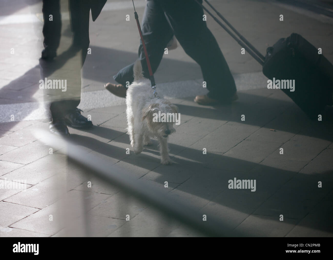 Person walking dog, another with suitcase - Stock Image