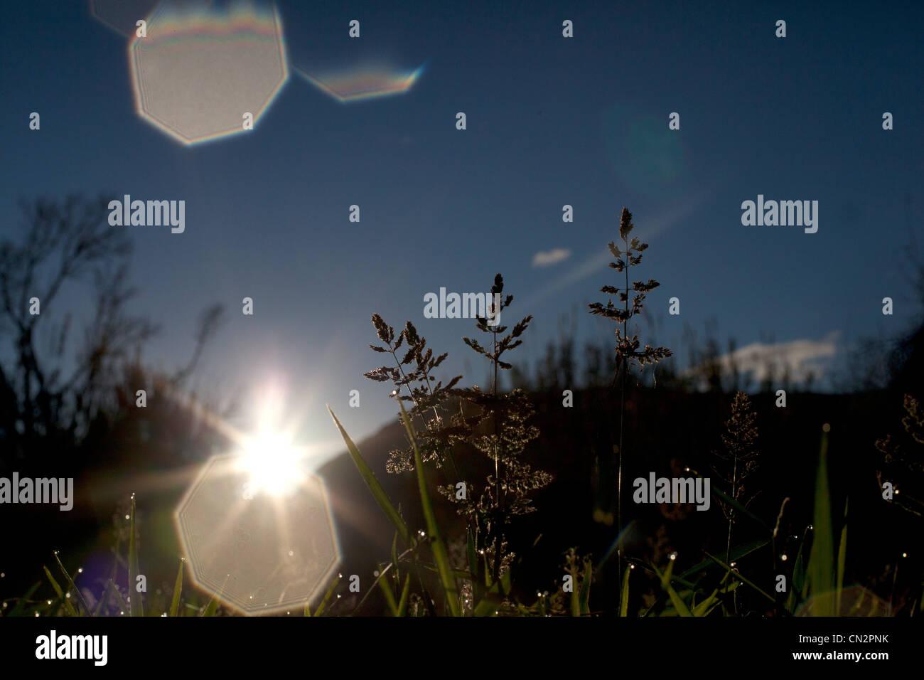 Meadow scene in sunlight - Stock Image