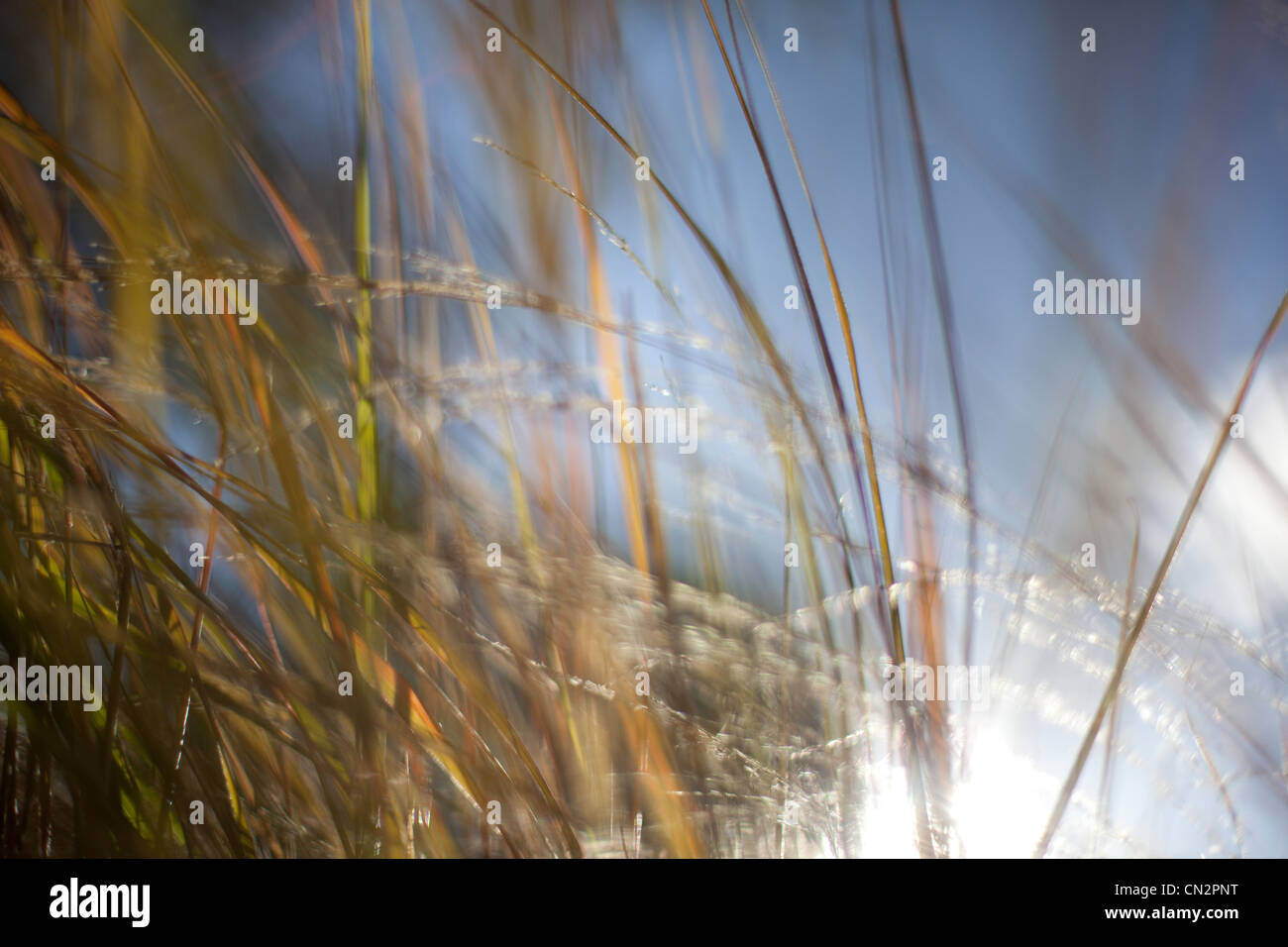 Grass abstract, close up - Stock Image