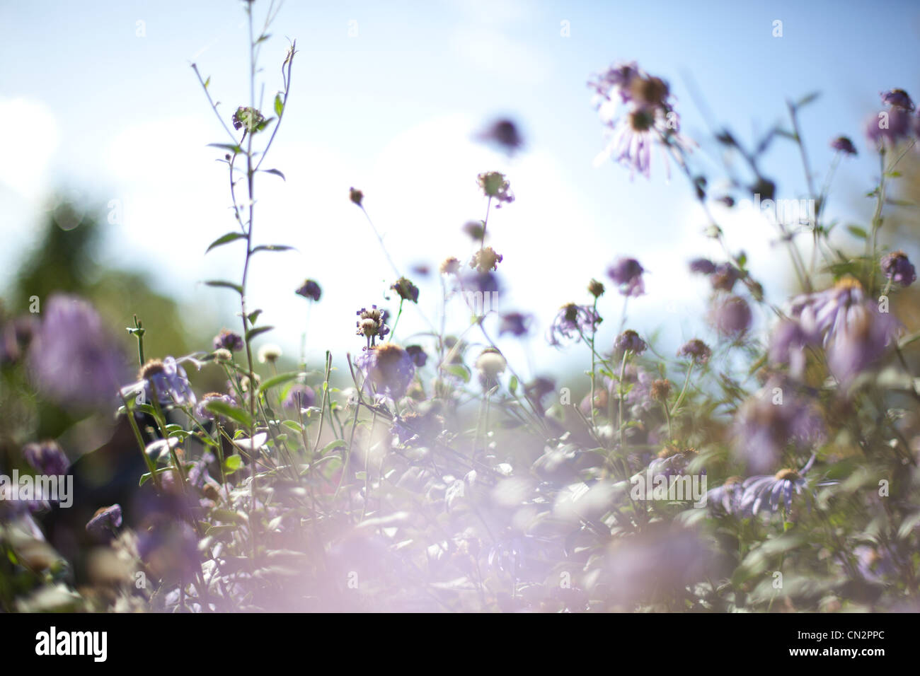 Wildflowers - Stock Image