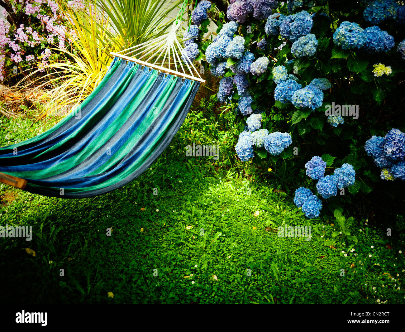 Summer in New Zealand: blue hammock, lawn and hydrangea. - Stock Image
