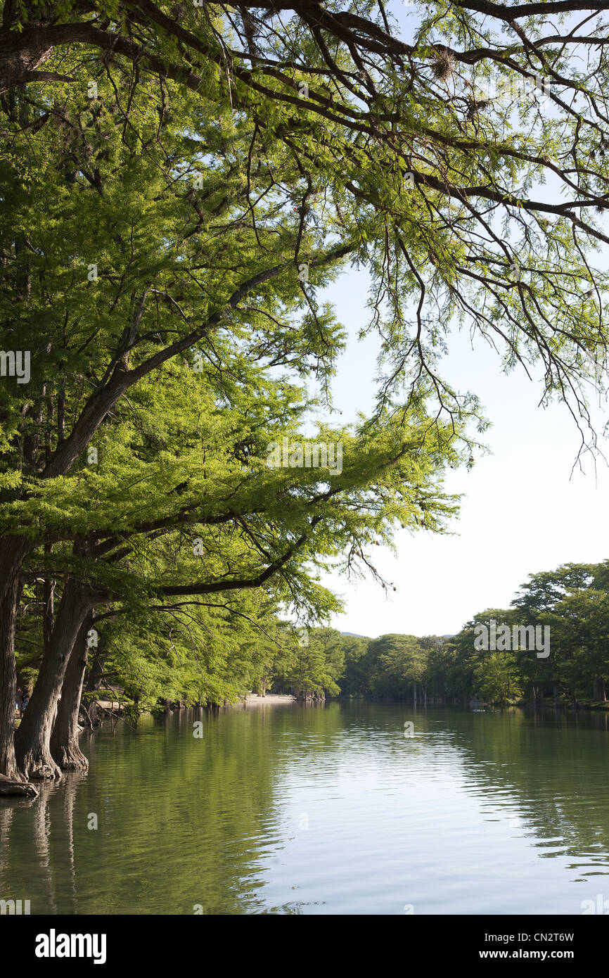 Large Trees Along Peaceful River, Texas, USA - Stock Image