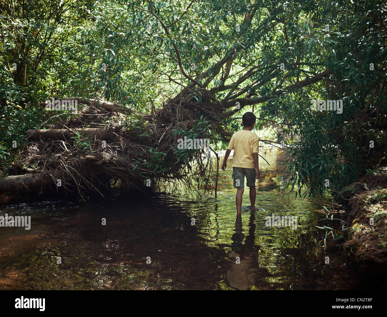 Boy wades along stream through woodland bush, New Zealand. - Stock Image