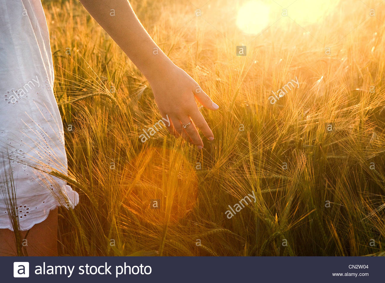 Close up of young woman in barley field - Stock Image