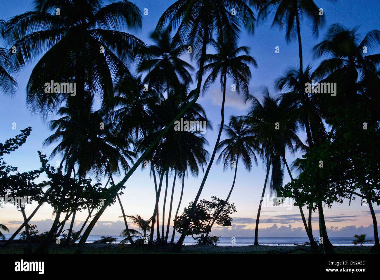 Palm trees in silhouette, Pigeon Point, Tobago - Stock Image