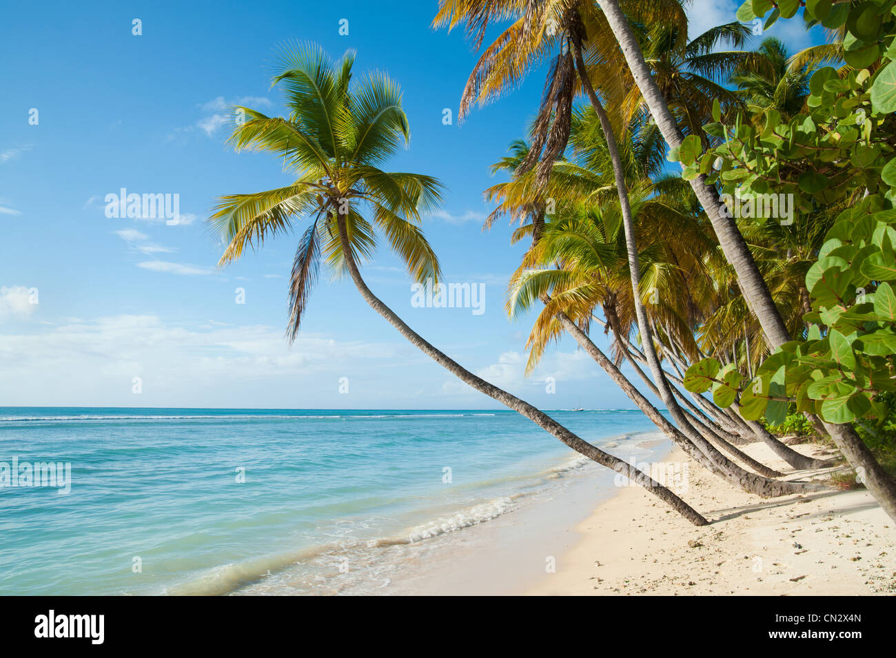 Beach, sea and palm trees, Pigeon Point, Tobago - Stock Image