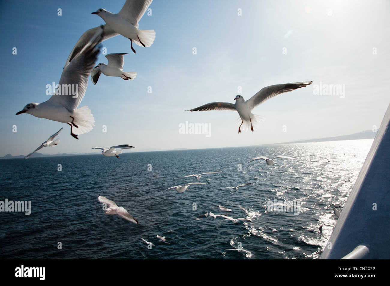 Seagulls flying over sea - Stock Image