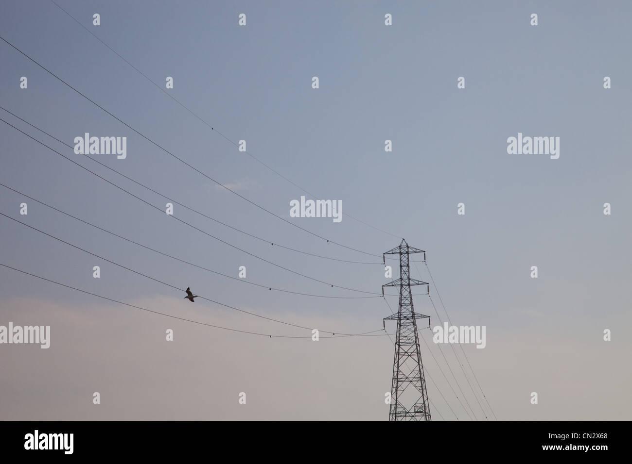 Bird flying near power lines - Stock Image