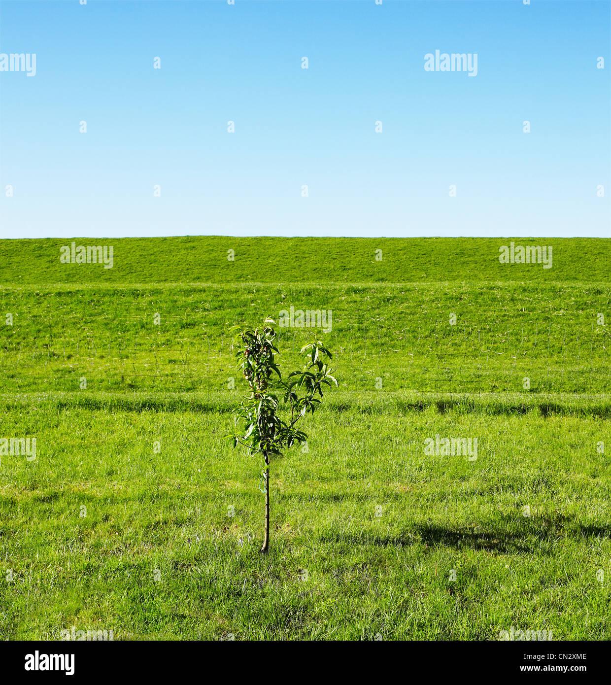 sapling-in-field-CN2XME.jpg