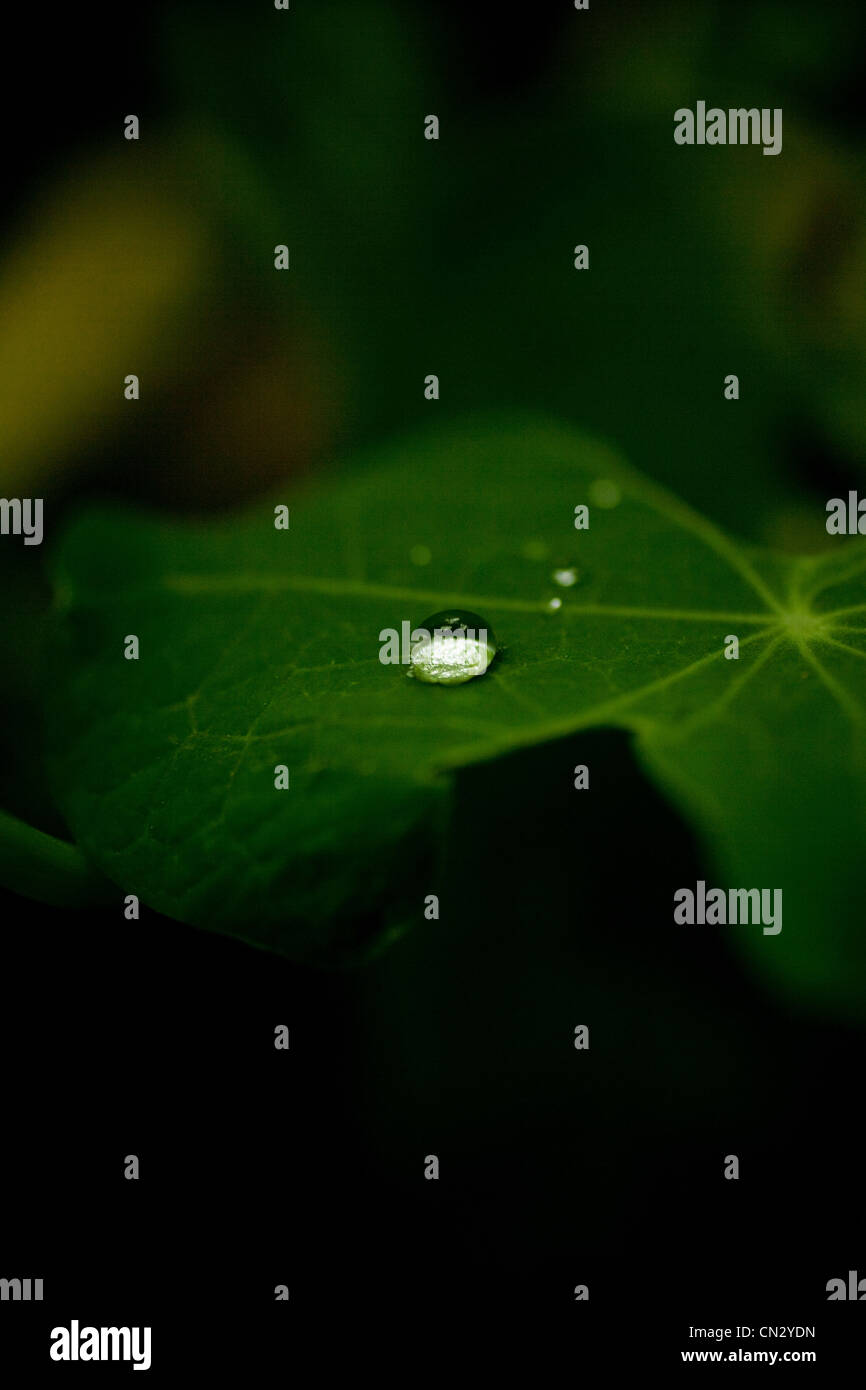 Water droplet on leaf - Stock Image