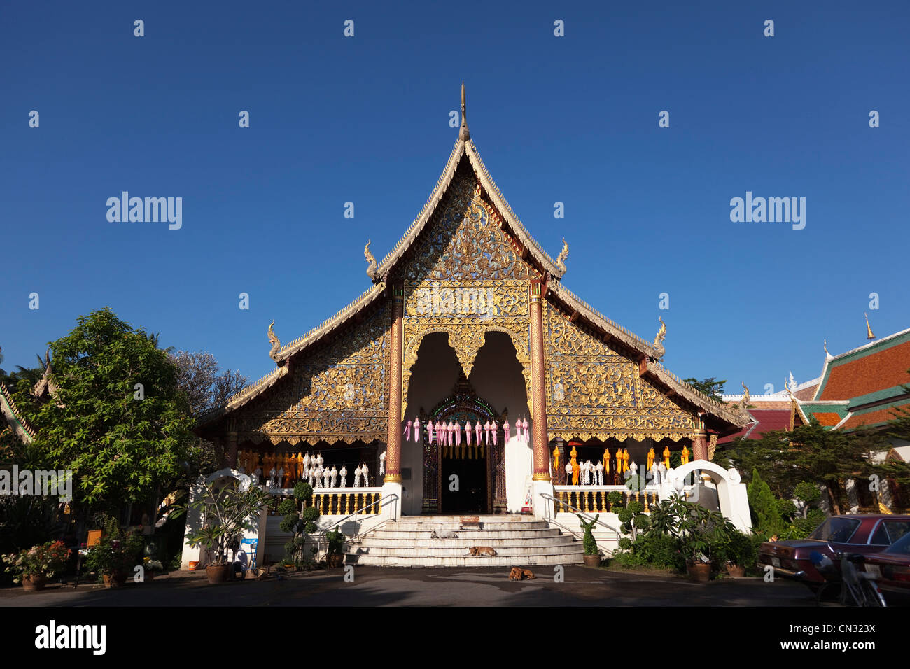Feral dogs in front of Wat Chiang Mun temple, Chiang Mai, Thailand - Stock Image
