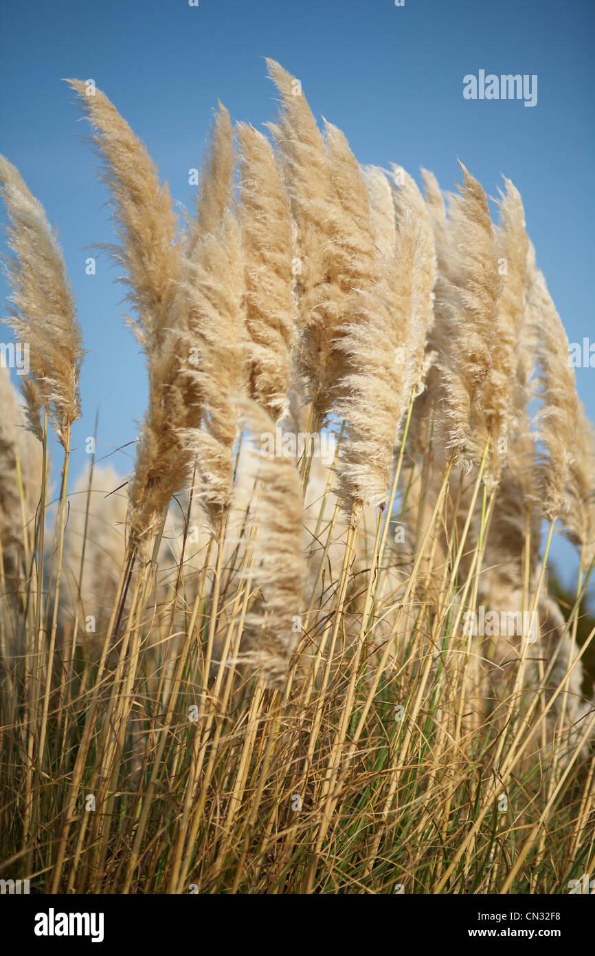 Seagrass, North Carolina, USA - Stock Image