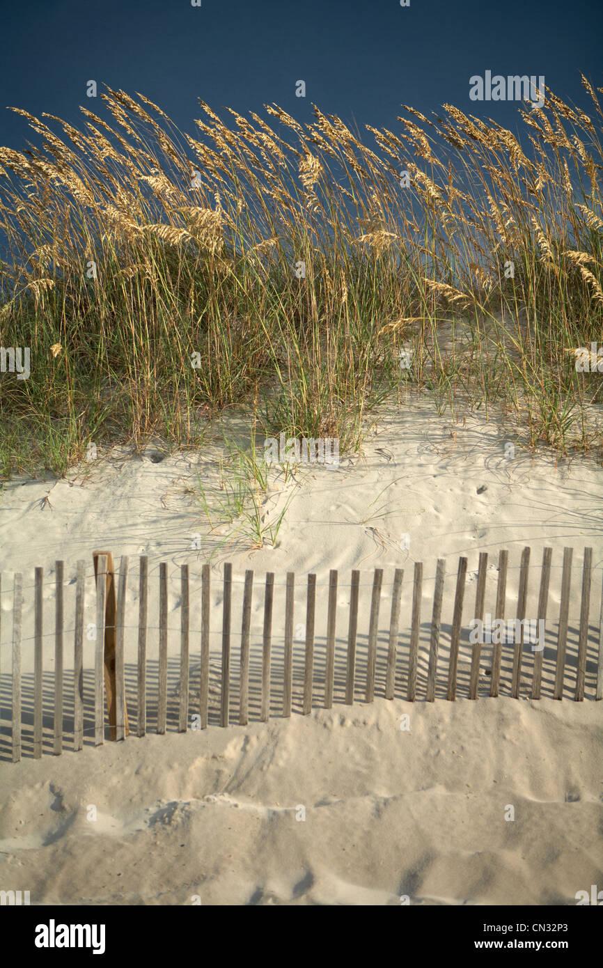 Sea grass in sand dunes, North Carolina, USA - Stock Image