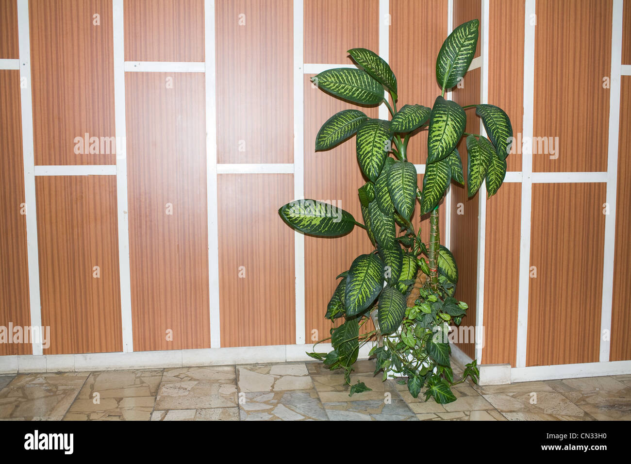 Pot plant against panelled wall - Stock Image