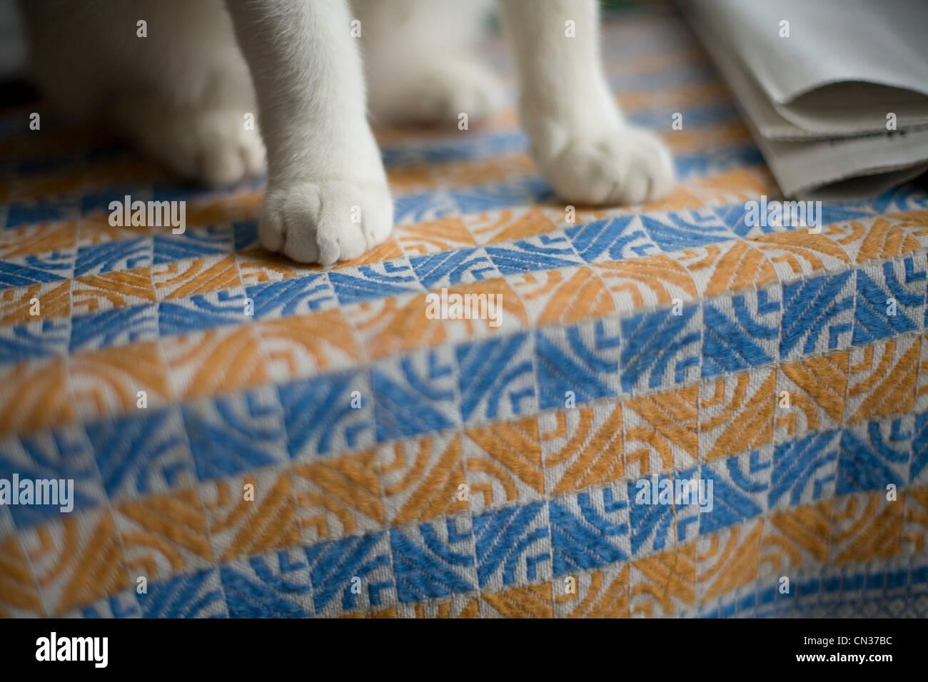 Cat's paws, close up - Stock Image