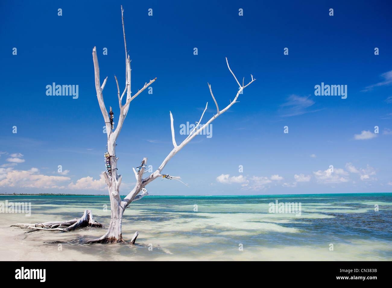 Tree on beach, Punta Allen, Yucatan, Mexico - Stock Image