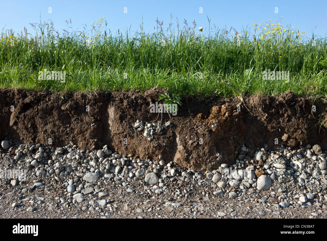 Soil and grass cross section - Stock Image